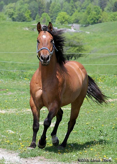 dun horse image search results