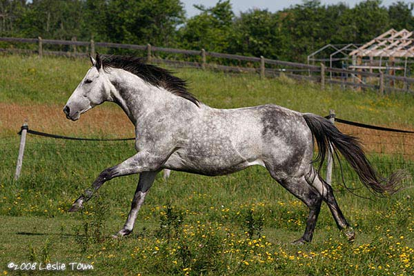 off track thoroughbred horse